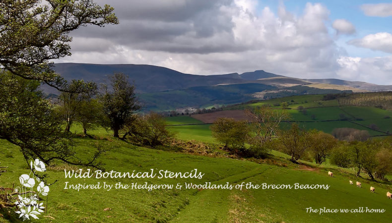 Brecon-Beacons-Wild-Botanicals2