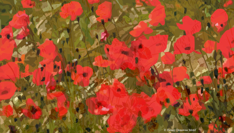Wild-poppies-field3