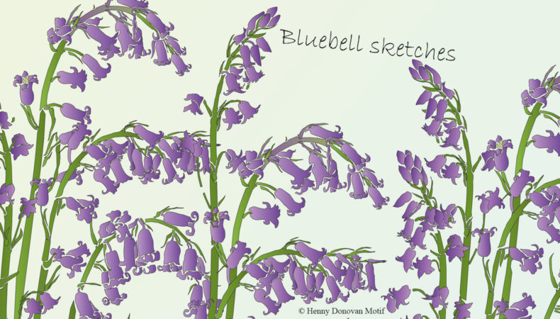 bluebell-sketches-4