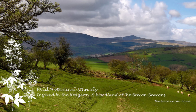 Brecon-Beacons-Meadowsweet
