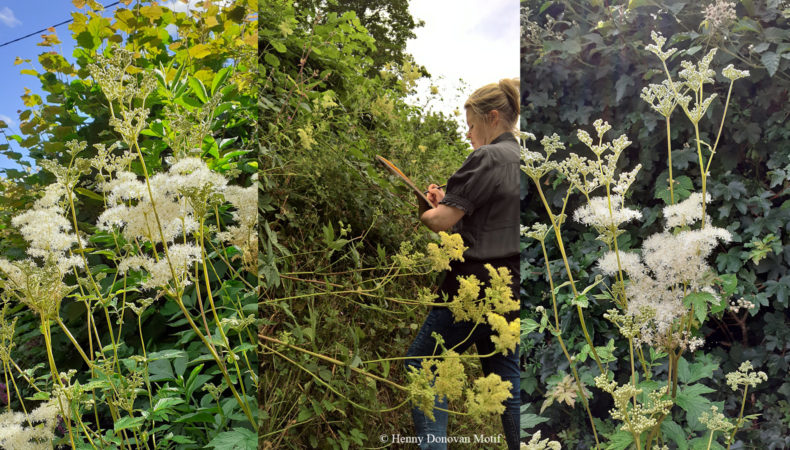 Meadowsweet-hedgerow1