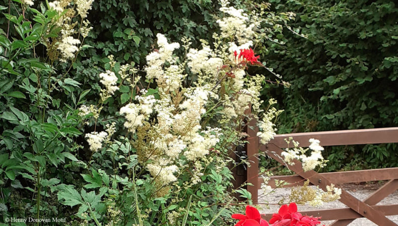 Meadowsweet-hedgerow2