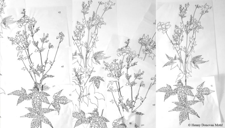 Meadowsweet-sketches-1