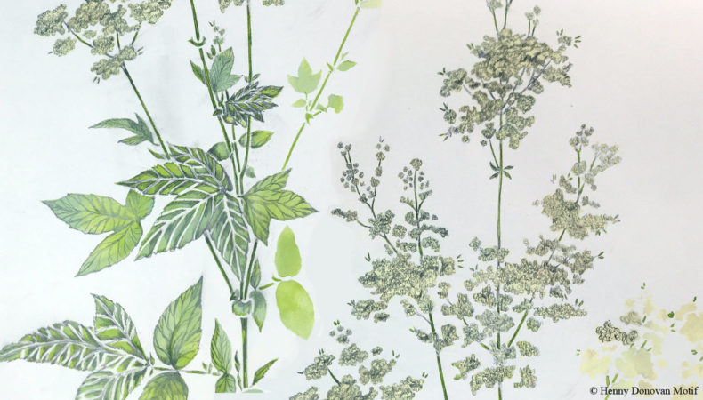 Meadowsweet-sketches-4